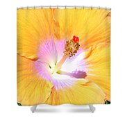 Gold Hibiscus Shower Curtain