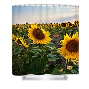 Gold Medals Shower Curtain