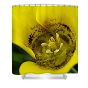 Gold Nugget Macro Shower Curtain
