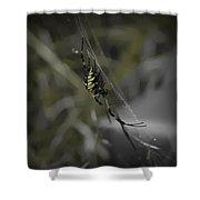 Gold Orb Weaver Shower Curtain