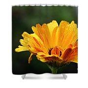 Gold Petals Shower Curtain