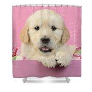 Gold Retriever Pink Background Shower Curtain