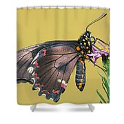 Gold Rim Swallowtail Butterfly Shower Curtain