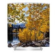 Golden Aspen On The Lake Shower Curtain