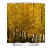 Golden Aspens Shower Curtain by Don Schwartz