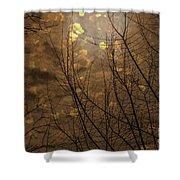 Golden Autumn Abstract Sky Shower Curtain
