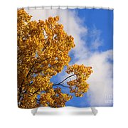 Golden Autumn Leaves And Blue Sky Shower Curtain