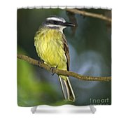 Golden Beauty... Shower Curtain