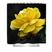 Golden Beauty Shower Curtain