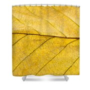 Golden Beech Leaf Shower Curtain