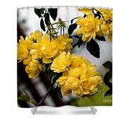 Golden Blooms One Shower Curtain