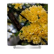 Golden Blooms Two Shower Curtain
