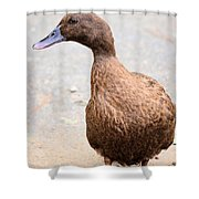 Golden Brown Feathers Shower Curtain