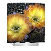 Golden Cactus Flowers  Shower Curtain