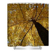 Golden Canopy Shower Curtain