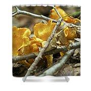 Golden Chanterelle - Cantharellus Cibarius Shower Curtain