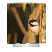 Golden Chickadee Shower Curtain