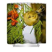 Golden Christmas Finch Shower Curtain