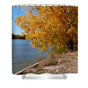 Golden Cottonwoods Shower Curtain