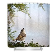 Golden-crowned Kinglet Shower Curtain