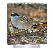 Golden-crowned Sparrow Shower Curtain