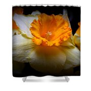 Golden Daffodils Shower Curtain