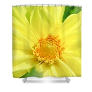 Golden Daisy Shower Curtain