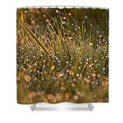 Golden Dew Drops Shower Curtain