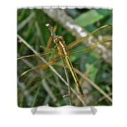 Golden Dragonfly At Rest Shower Curtain
