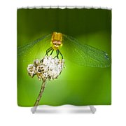 Golden Dragonfly On Perch Shower Curtain