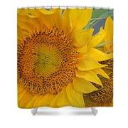 Golden Duo - Sunflowers Shower Curtain
