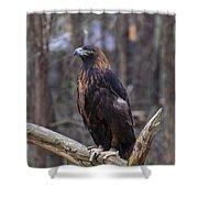 Golden Eagle 1 Shower Curtain