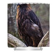 Golden Eagle 2 Shower Curtain