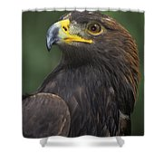 Golden Eagle Portrait Threatened Species Wildlife Rescue Shower Curtain
