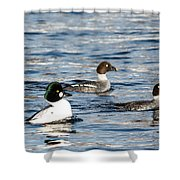 Golden-eyed Ducks Shower Curtain