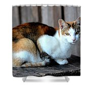 Golden Eyed Ferrel Shower Curtain