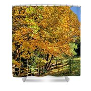 Golden Fenceline Shower Curtain