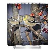 Golden Finch Cold Shoulder Shower Curtain