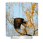 Golden Flight In April Shower Curtain