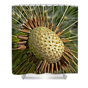 Seeds Of Time Shower Curtain