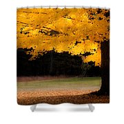 Golden Glow Of Autumn Fall Colors Shower Curtain
