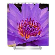 Golden Glow Of The Lavender Lotus Shower Curtain