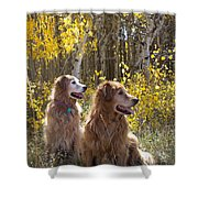 Golden Goldens - Golden Retriever Brothers - Casper Mountain - Casper Wyoming Shower Curtain