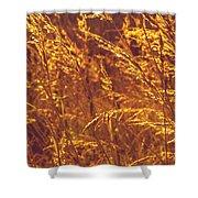 Golden Grass  Shower Curtain