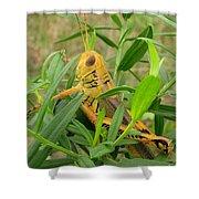 Golden Grasshopper Shower Curtain