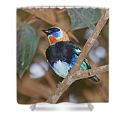 Golden-hooded Tanager Shower Curtain