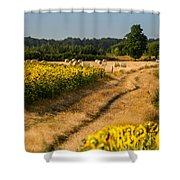 Golden Hour On Country Road Shower Curtain