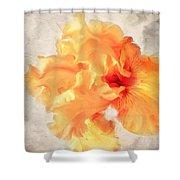 Golden Iris 2 Shower Curtain