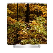Golden Leaves In Autumn Shower Curtain