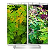 Golden Leaves To Purple Seeds Shower Curtain